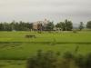ベトナム田園地帯の中のお墓